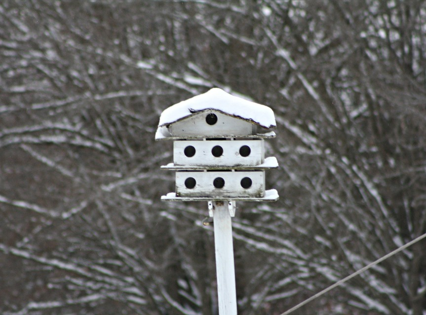 snow-day10